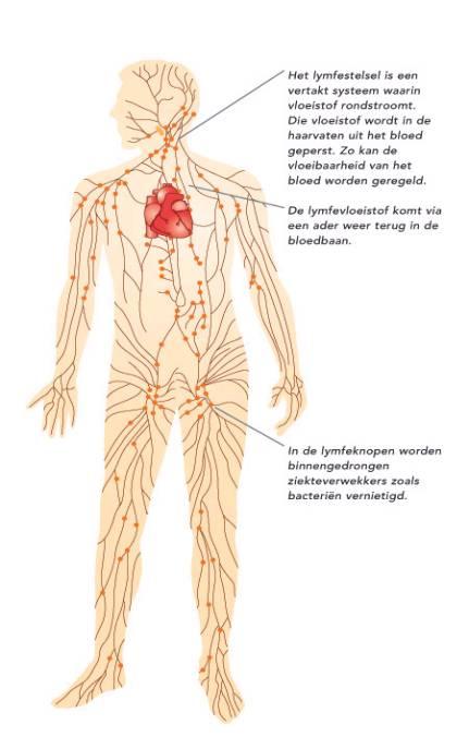 oedeemtherapie lymfoedeem huidtherapeut
